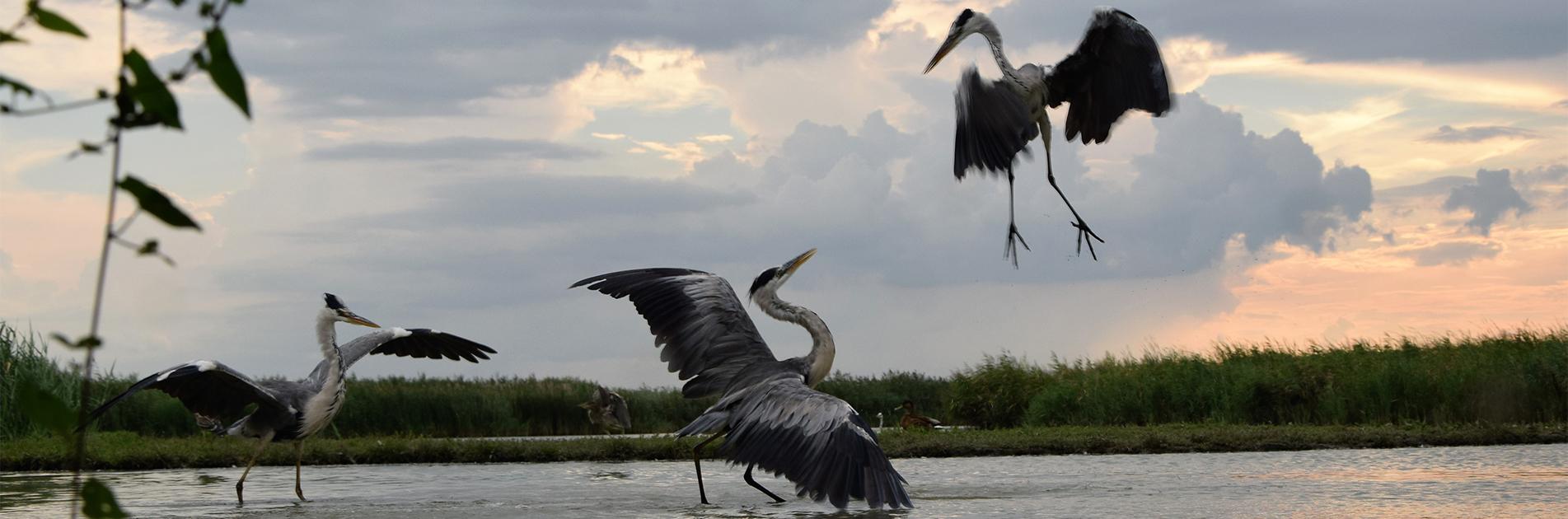 Fuglevildt i Ungarn